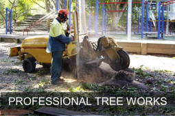 tree removal QLD
