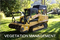 vegetation management arborcare qld